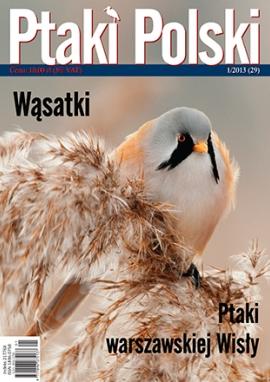 Ptaki Polski 1/2013
